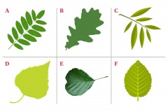 Leaves test.jpg